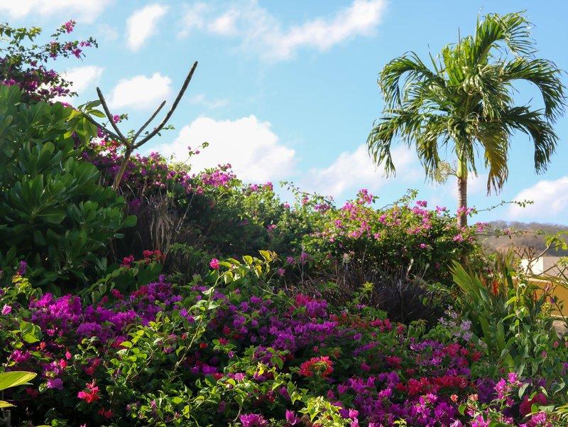 large_Dreams_resort_flowers.jpg