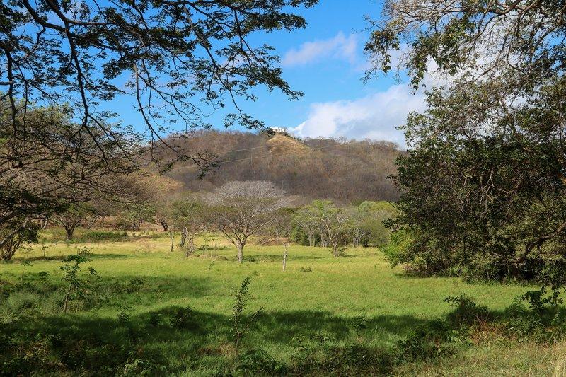large_Dry_rainforest.jpg