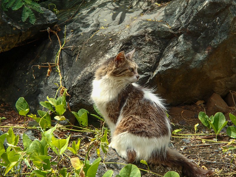 large_Puerto_Rican_cat__1_of_1_.jpg