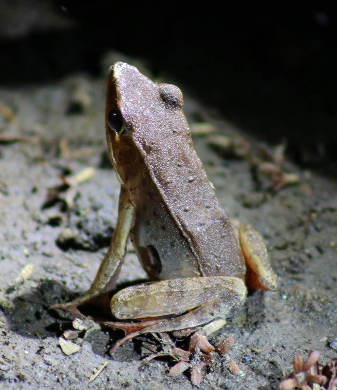 large_Toad.jpg