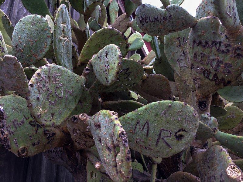 large_cactus_marks__1_of_1_.jpg