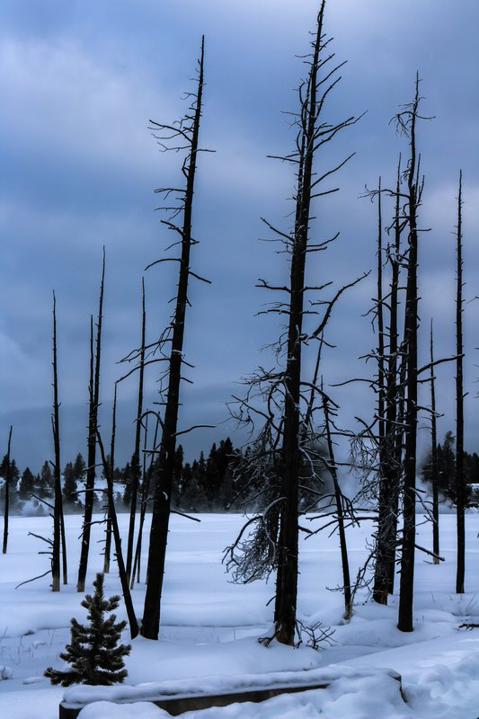 large_dead_trees..es__1_of_1_.jpg