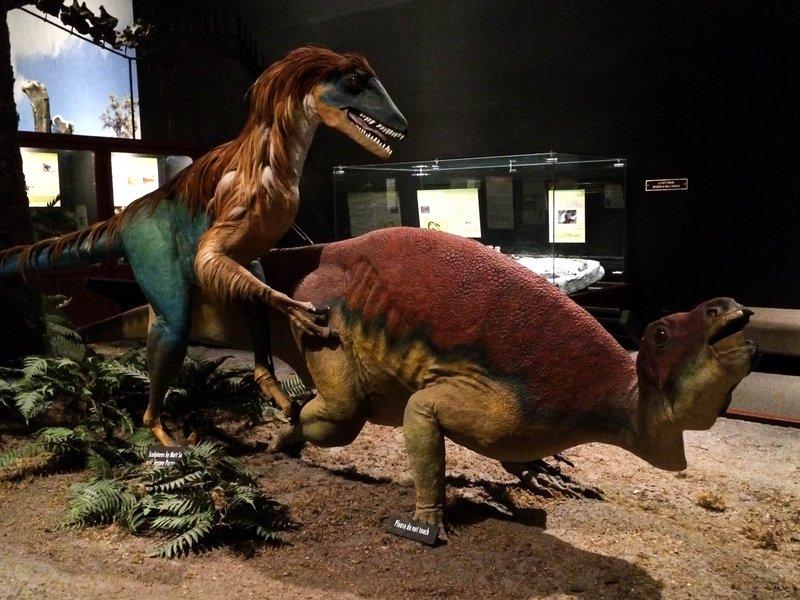 large_dinosaur_play__1_of_1_.jpg