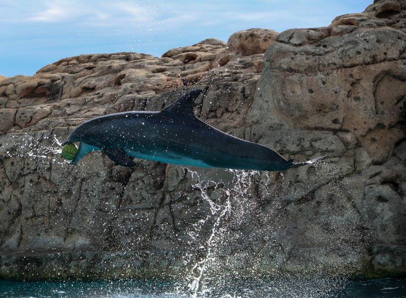 large_dolphin_ba..ll__1_of_1_.jpg