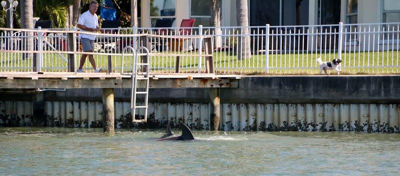 large_dolphin_te..og__1_of_1_.jpg