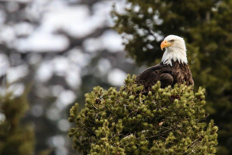 large_eagle__1_of_1_.jpg