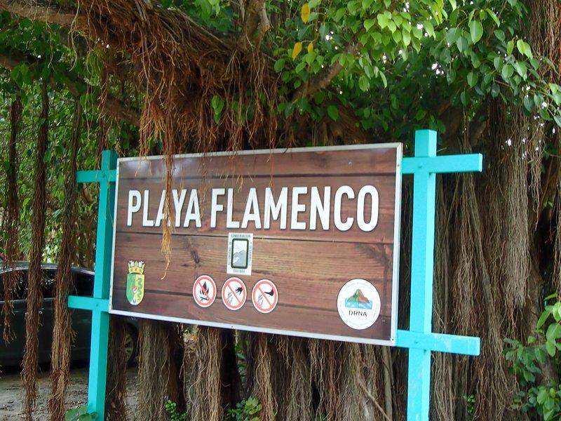 large_flamenco_b..gn__1_of_1_.jpg
