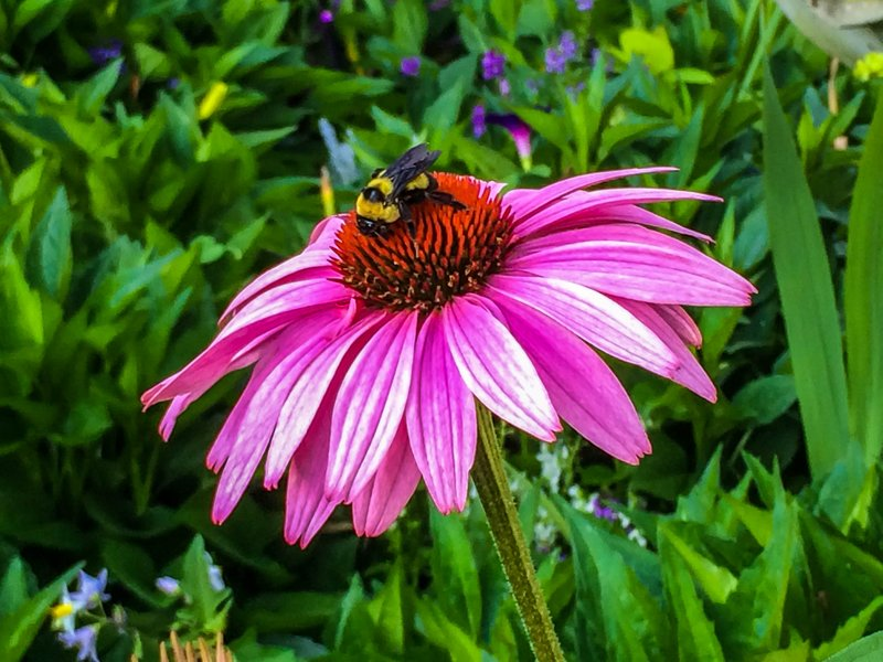 large_flower_with_bee__1_of_1_.jpg