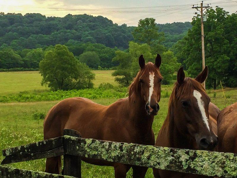 large_hillbilly_horses__1_of_1_.jpg