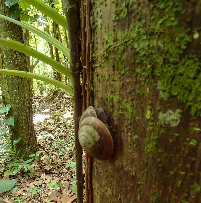 large_huge_snail__1_of_1_.jpg