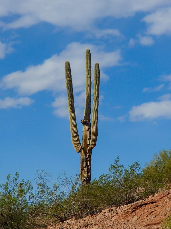 large_love_the_cactus__1_of_1_.jpg