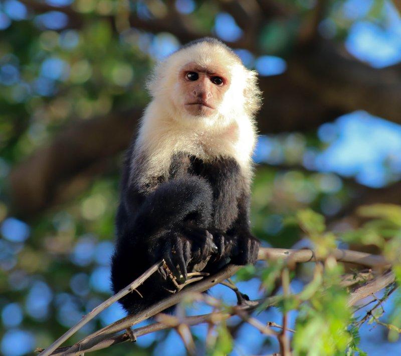 large_monkeys_in_the_morning.jpg
