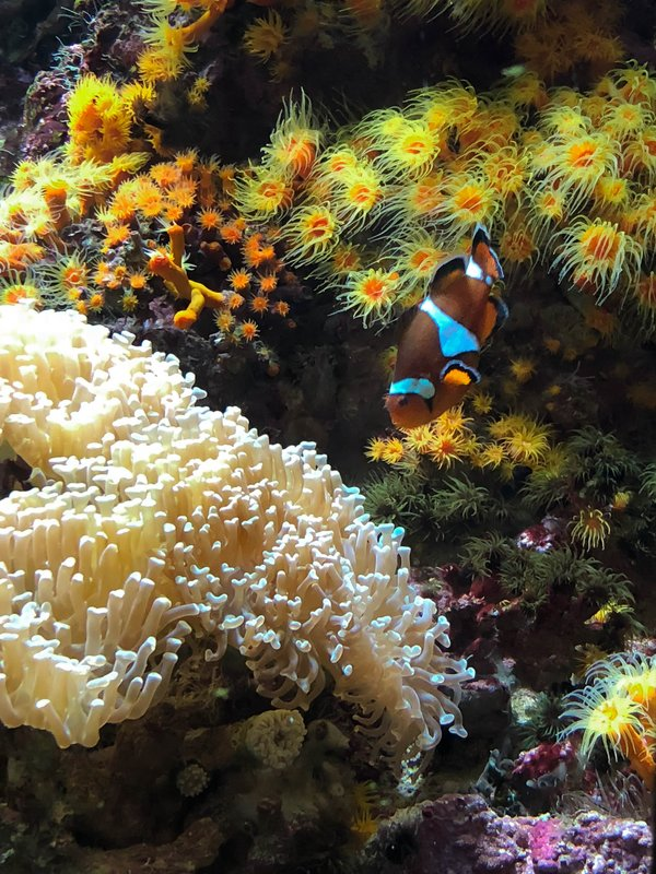large_nemo_in_the_corals.jpg