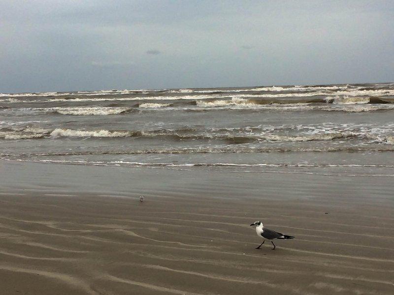 large_sea_gull_o..te__1_of_1_.jpg