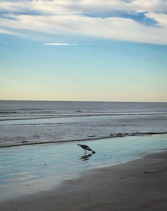 large_seagull_ha..st__1_of_1_.jpg