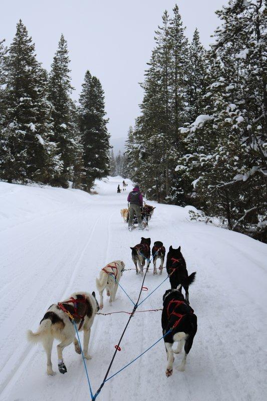 large_sled_dog_trail.jpg