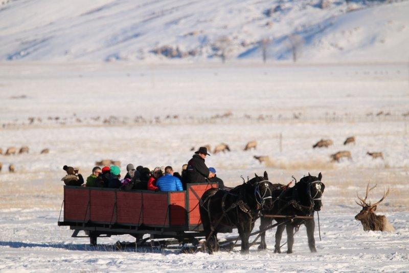 large_sleigh_ride_with_elk.jpg