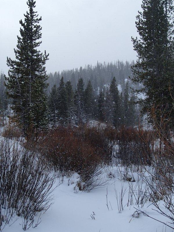 large_snowing_in_Grand_Teton.jpg