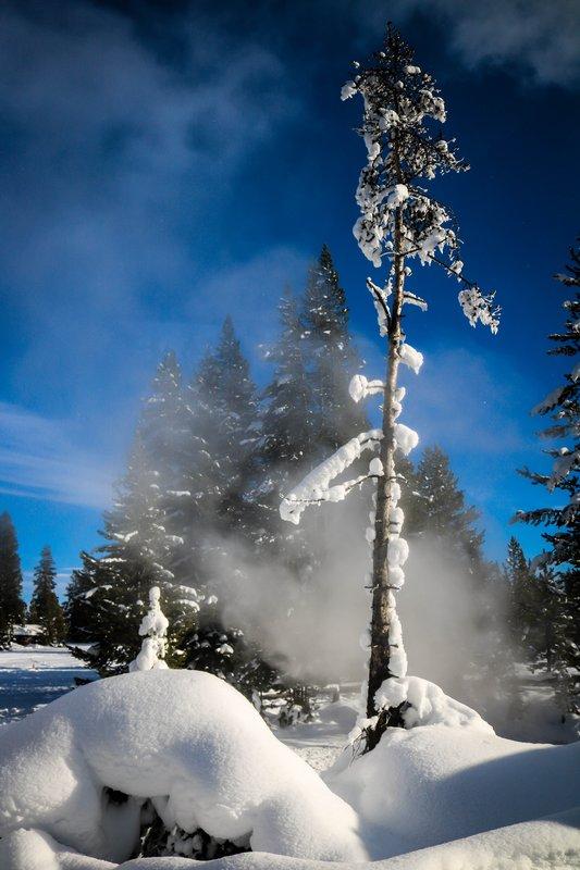 large_snowing_tree__1_of_1_.jpg