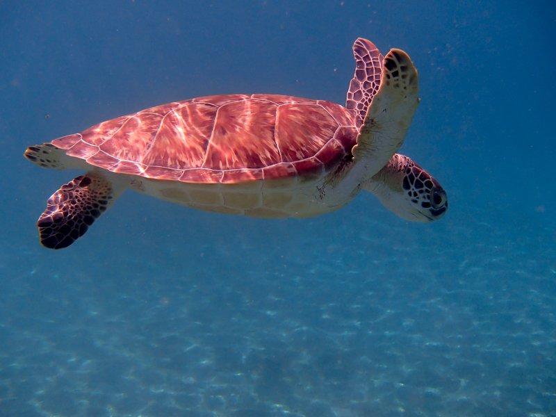 large_swimming_turtle__1_of_1_.jpg