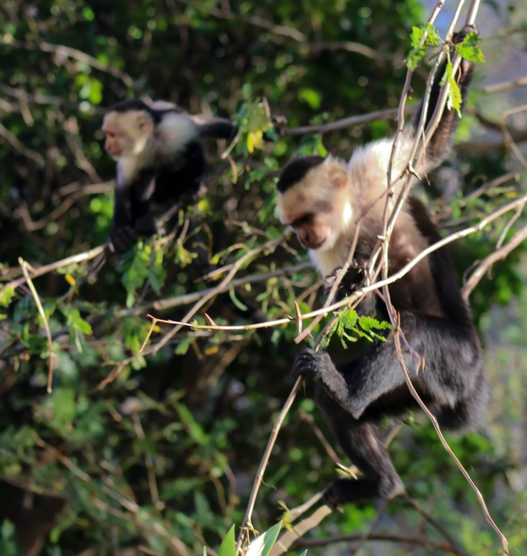 large_two_monkeys.jpg