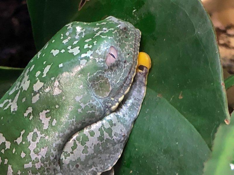 large_weird_frog_eye.jpg