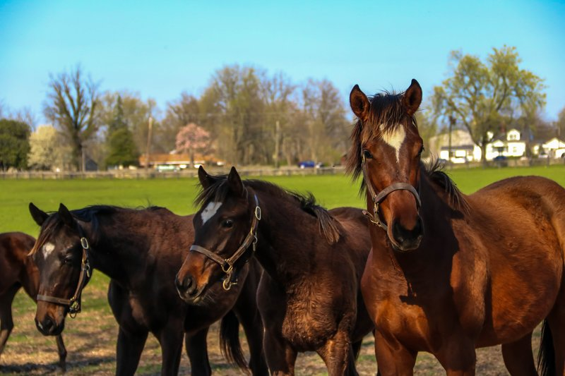 large_yearlings__1_of_1_.jpg