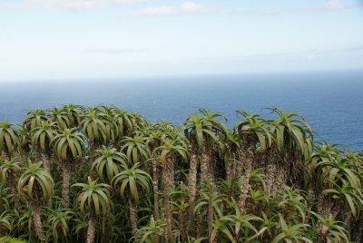 mini palm trees