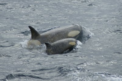 mom and baby swimming away