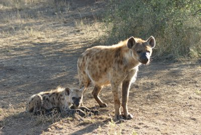 mom and baby hyena