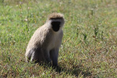 monkeys in crater too