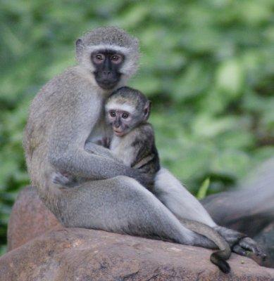 my_fav_monkeys.jpg