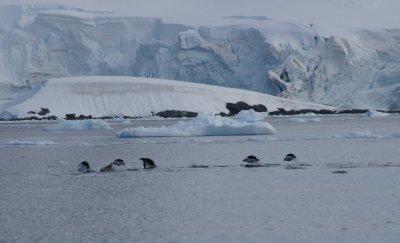 penguin hopping