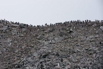 penguin ridge