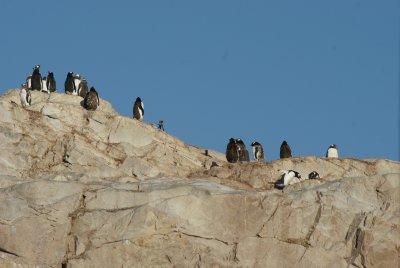penguin ridgeline