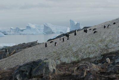 penguin slope