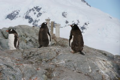 penguins with ruins