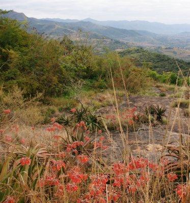 swazi landscape