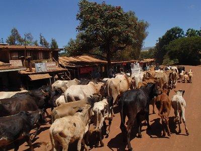 tanzanian traffic