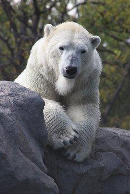 the other polar bear