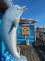 Frisky Dolphin (1 of 1)