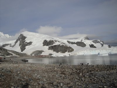 view from penguin colony
