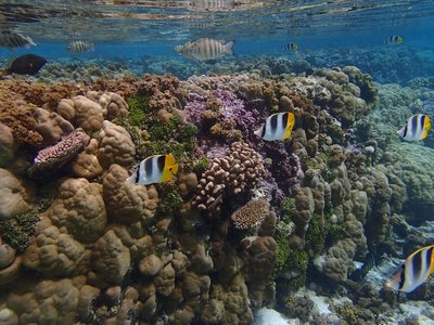 wall of coral