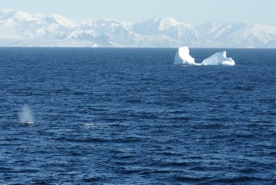 whale blow with iceberg