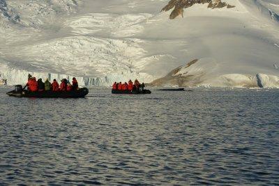 zodiak whale watching