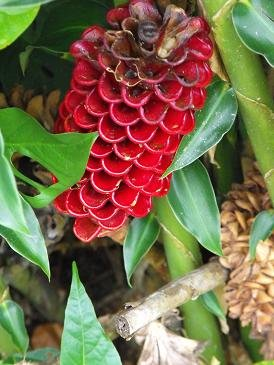 CATIE red bloom closeup