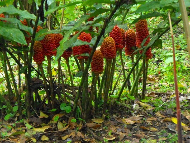 VILLABLANCA vertical red blooms