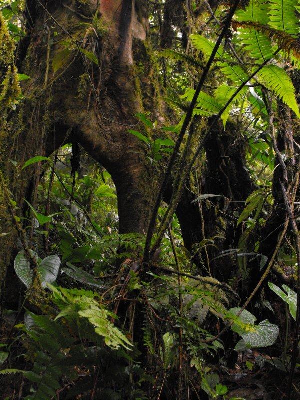 VILLABLANCA tree roots