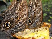 CURU Wildlife Refuge, Costa Rica