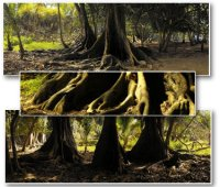 TreesComp01